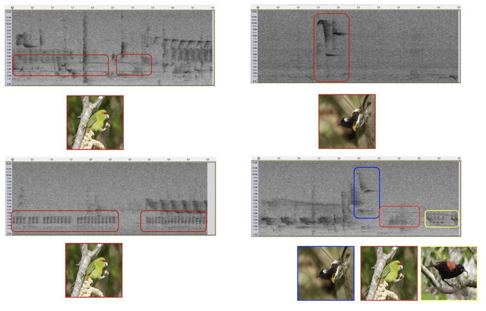 Analyse des spectrogrammes par TensorFlow